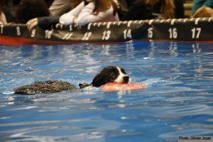 CHIEN PLONGEUR Aqua dog 1